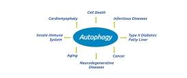 Happy#35_autophagy