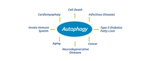 Happy#35_autophagy